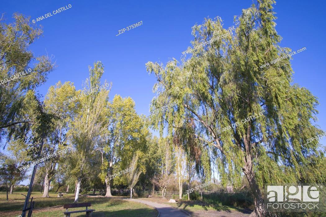 Imagen: A sunny afternoon in autumn La Marjal park Gandia, Valencia Spain.