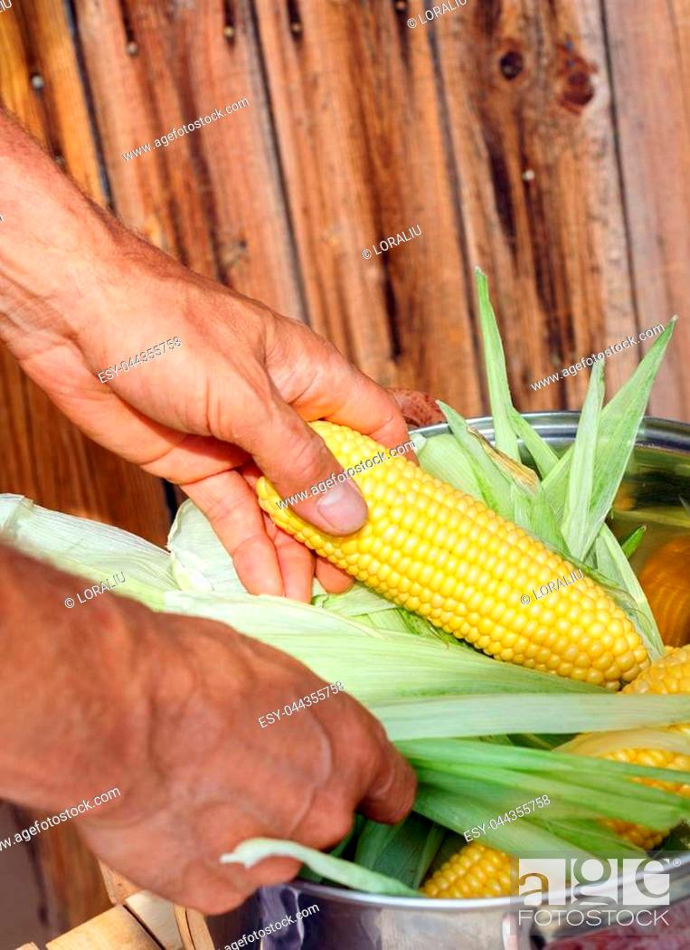 Stock Photo: Farmer holding corn cobs in hand on the background of wooden wall.