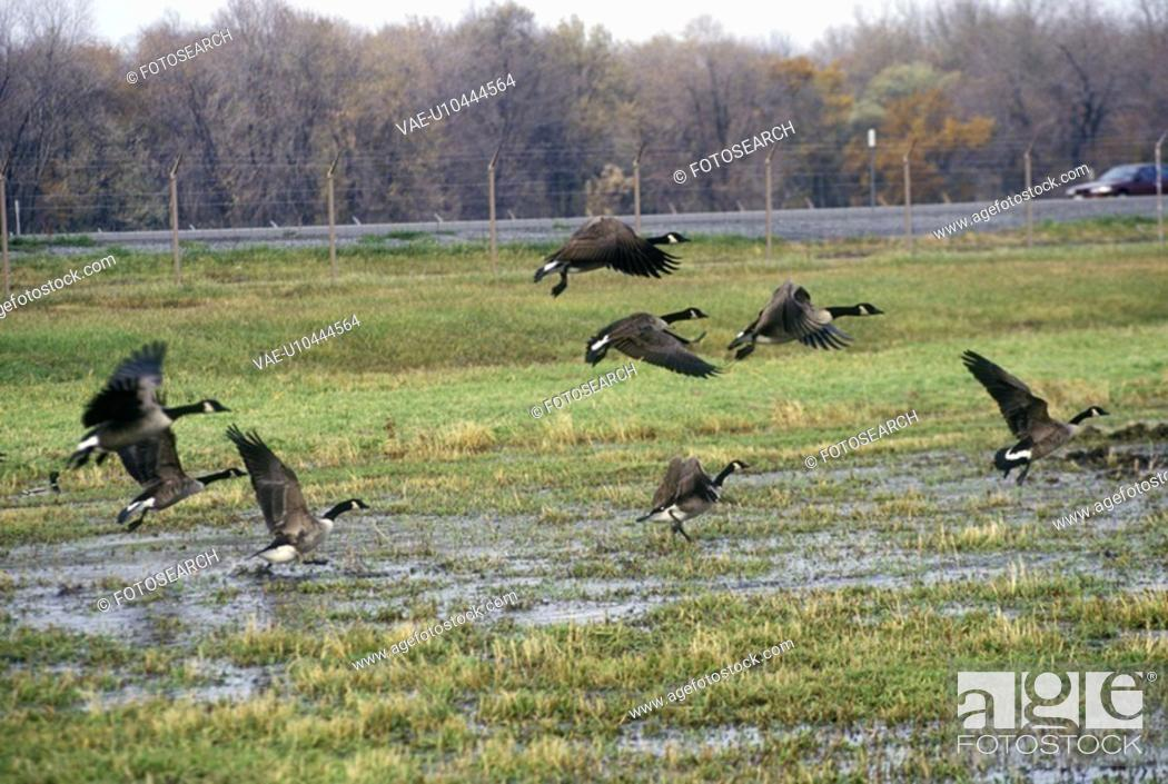Stock Photo: Birds flying over Montezuma National Wildlife Refuge.
