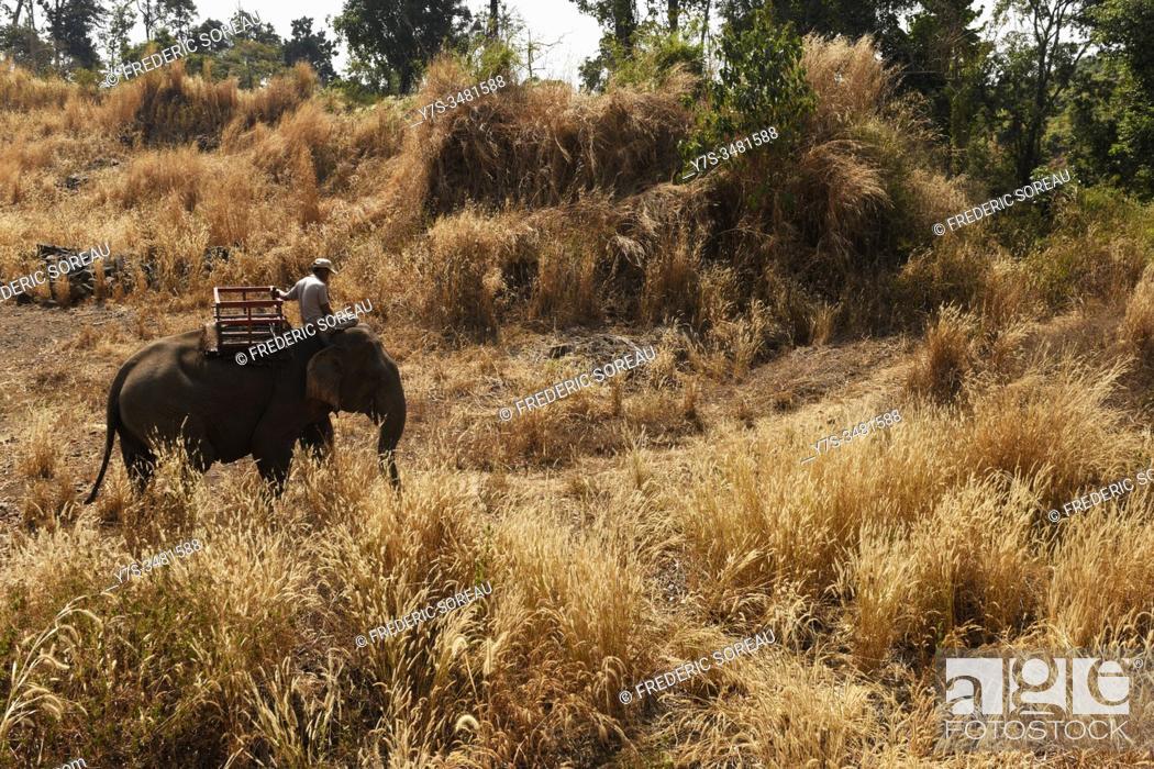 Stock Photo: Elephant in the jungle, Banlung, Ratanakiri Province, Cambodia, South East Asia.