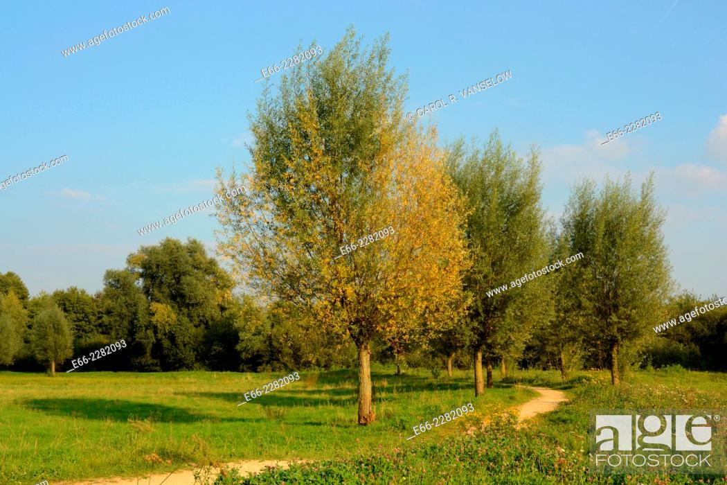 Stock Photo: Autumn in Limburg. Field with trees with leaves changing colours and path. Netherlands.