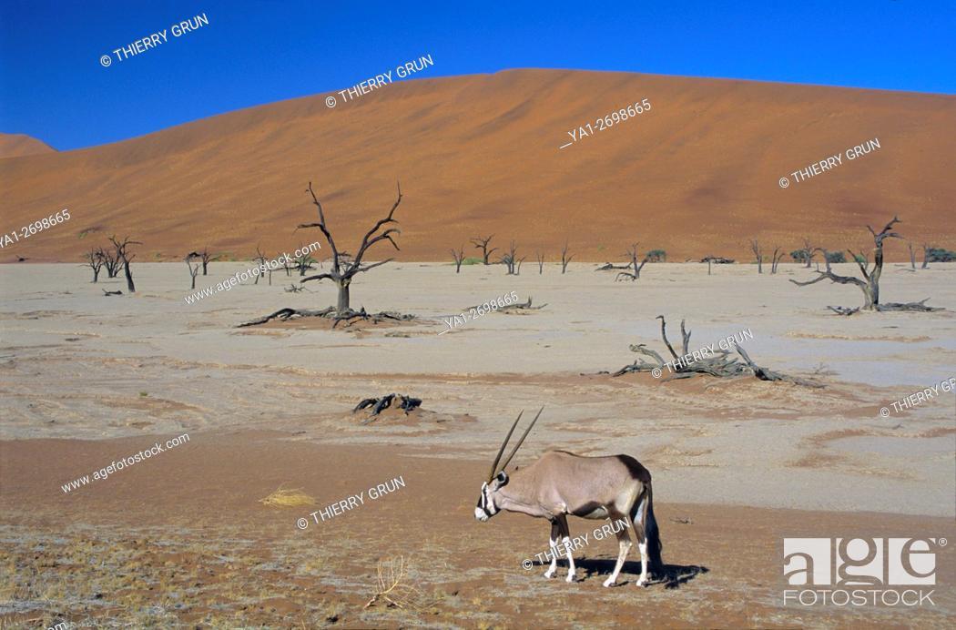 Stock Photo: Namibia, Namib-Naukluft National park, Sossusvlei, Dead vlei and gemsbok (oryx gazella).