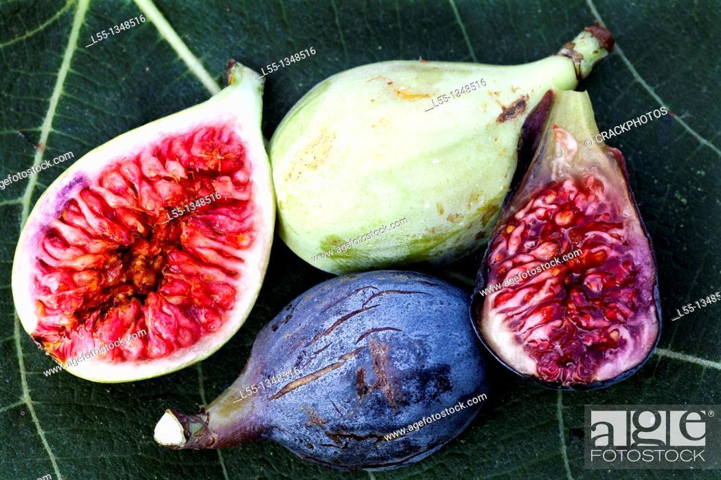 Stock Photo: Ficus carica.
