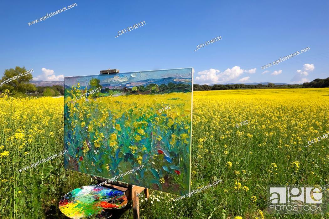 Stock Photo: Colza field. Barcelona, Spain.