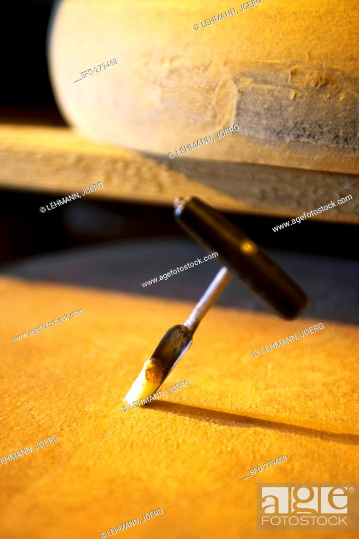 Stock Photo: Comté cheese with cheese tester in Fort de Rousse cheese cellar.