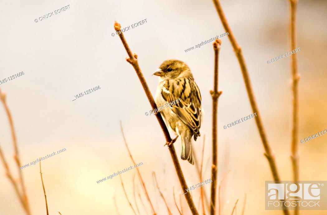 Stock Photo: Sparrow on branch next to marshland.