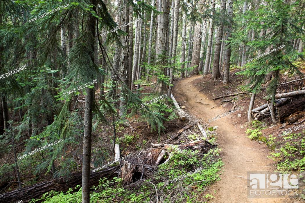 Stock Photo: A hiking trail winds through a sub-alpine forest in the Pacific Northwest.