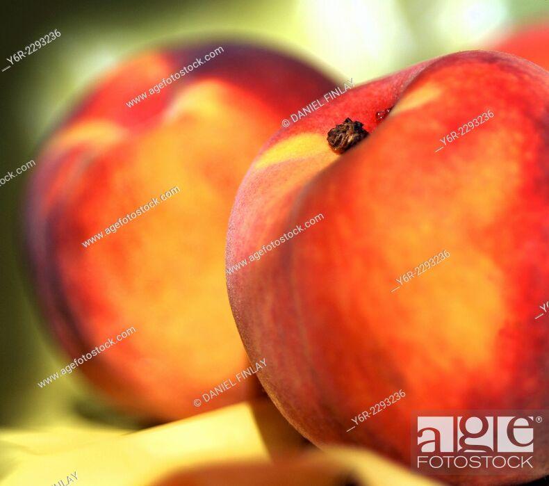 Stock Photo: Ryan's Sun peaches from Spain on a London windowsill.
