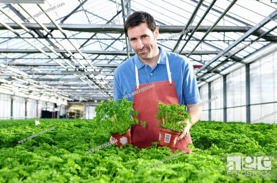 Stock Photo: Germany, Bavaria, Munich, Mature man in greenhouse between parsley plants.