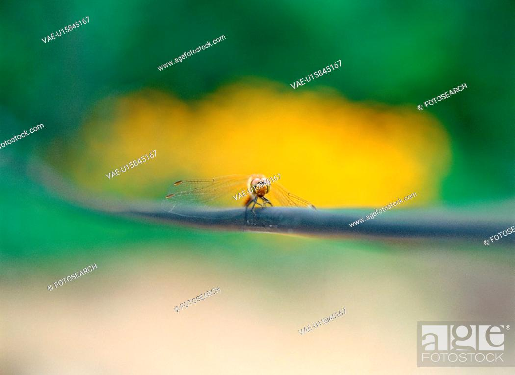 Stock Photo: arthropod, insect, animal, dragonfly, bug, film.