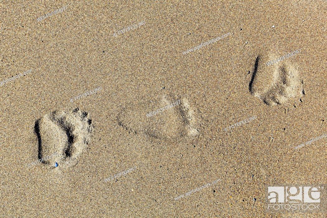 Stock Photo: USA, Alaska, Bear tracks on sand at Lake Clark National Park and Preserve.