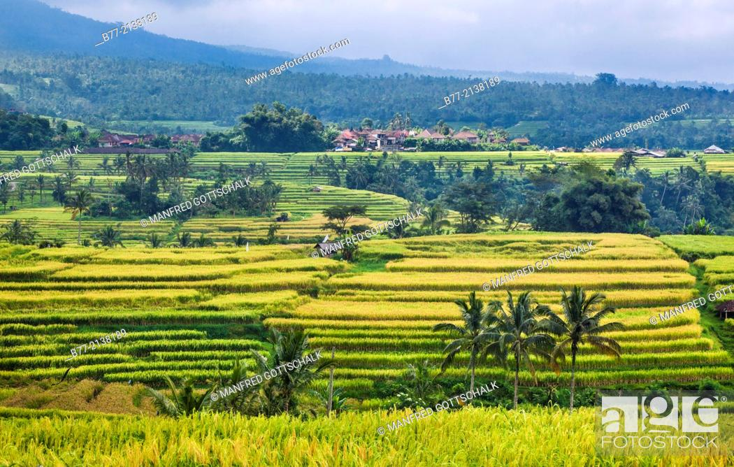 Indonesia, Bali, the Jatiluwih Rice Terraces at the foot of