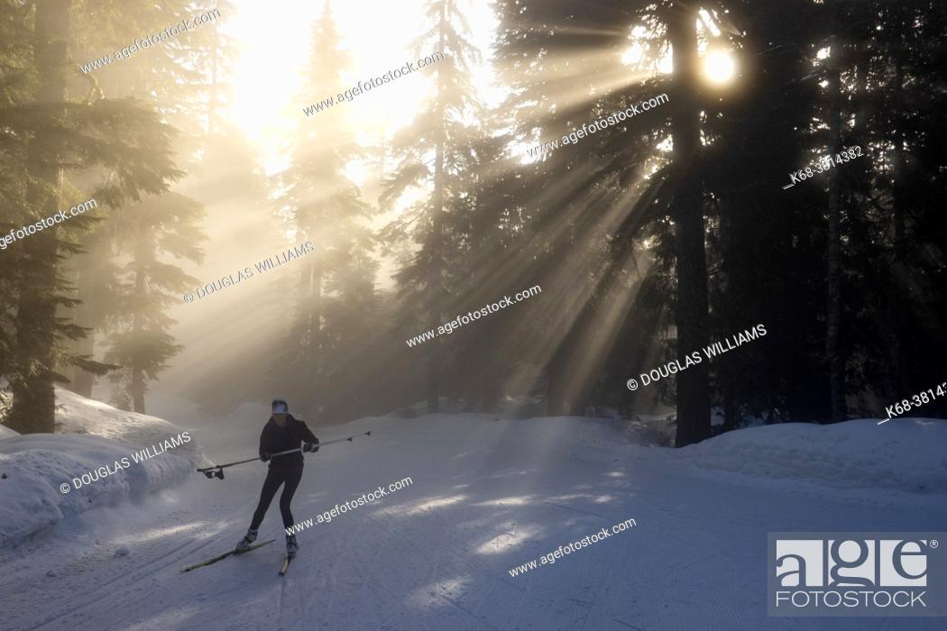 Stock Photo: Rays of sunlight on the forest and fog at Hollyburn cross country ski area at Cypress Mountain, Cypress Provincial Park, near West Vancouver, BC.
