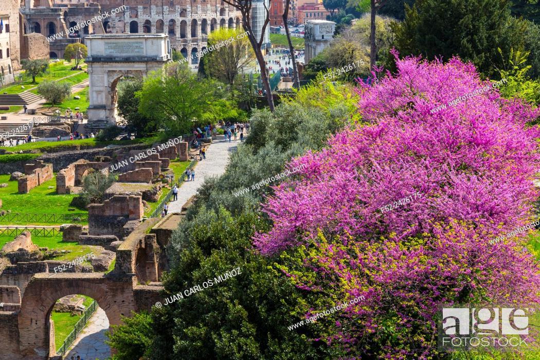 Stock Photo: Roman Forum, Rome, Italy, Europe.