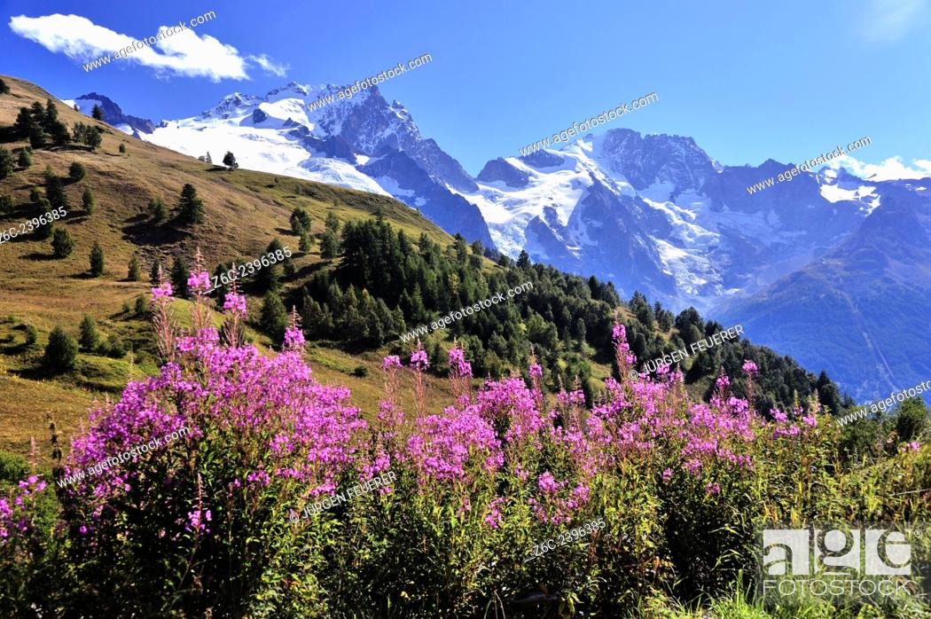 Stock Photo: Red flowers and beautiful mountain scenery of the Alps, Hautes-Alpes, French Alps, France.