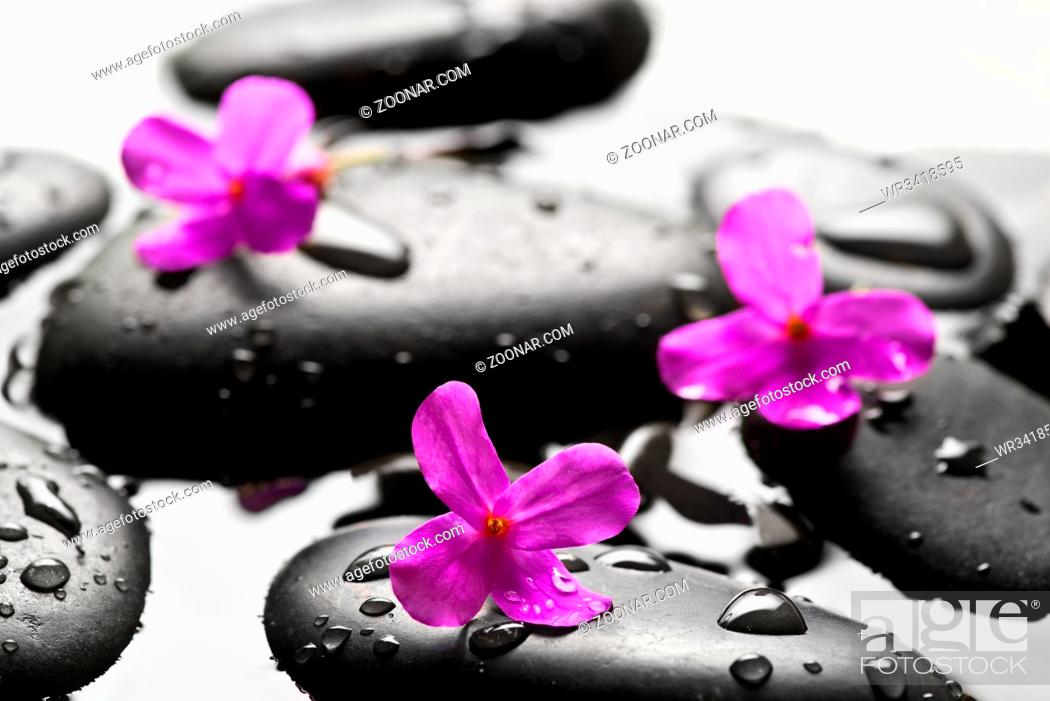 Stock Photo: Grey wet pebbles with flowers background.