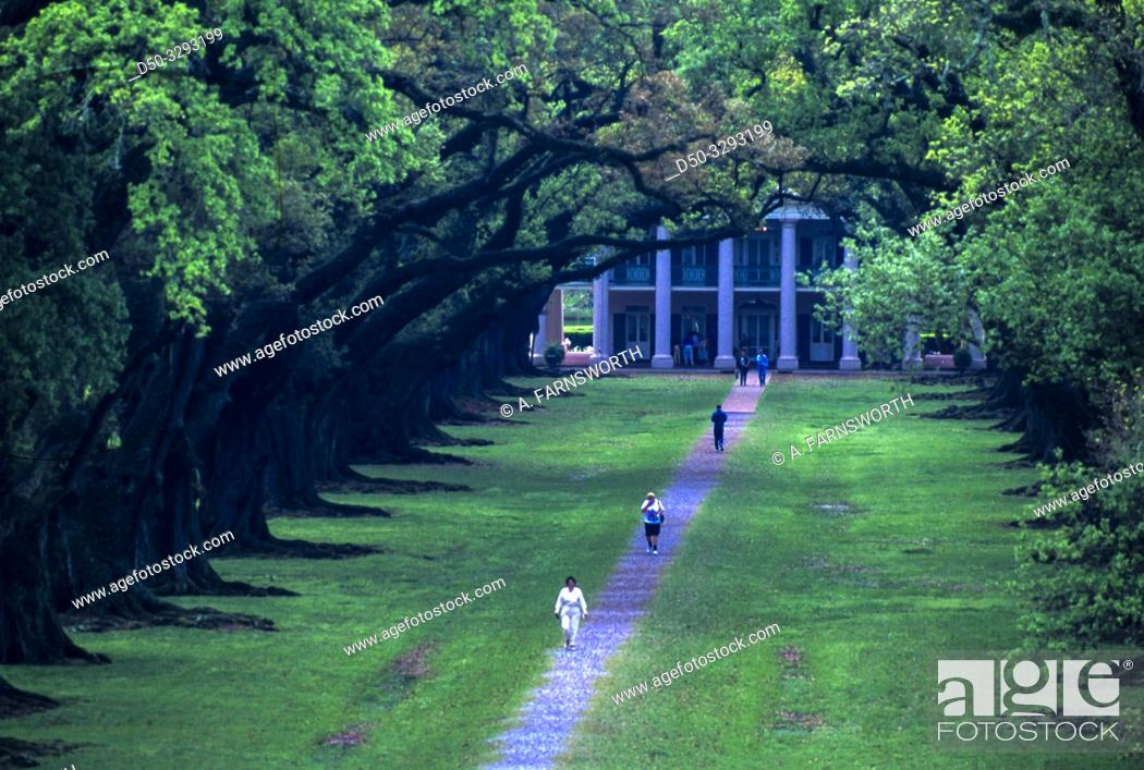 Stock Photo: Oak Alley, Louisiana, USA The Oak Alley Plantation and walkway leading up from the Mississippi.
