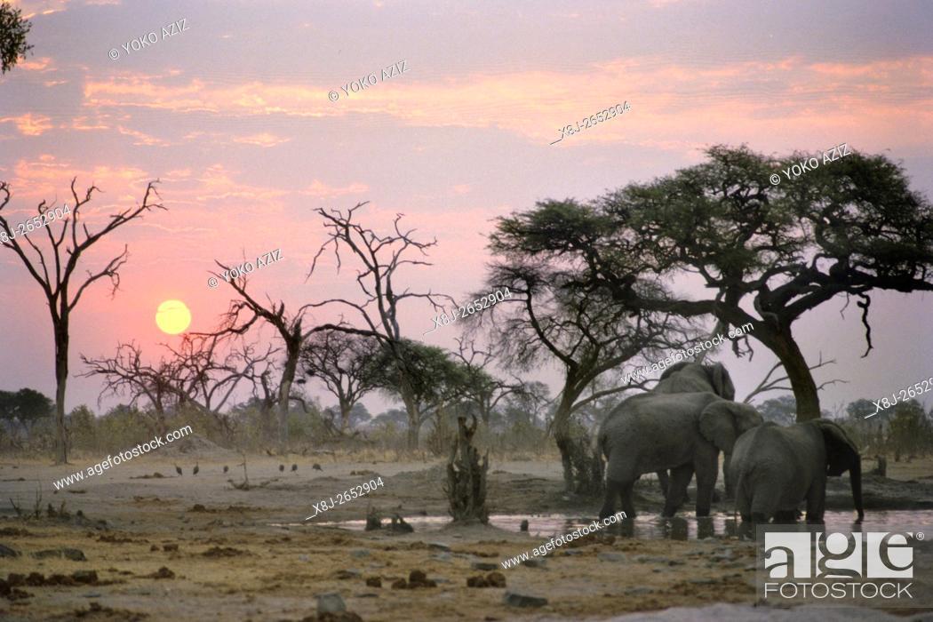 Stock Photo: botswana, moremi national park.