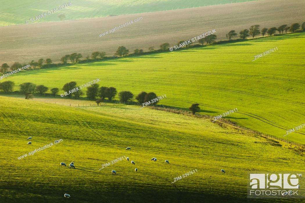 Stock Photo: Winter afternoon on the South Downs in West Sussex, England.