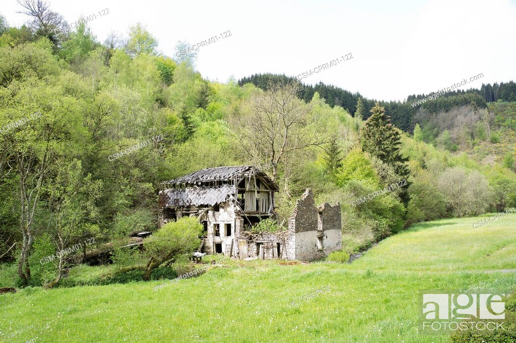 Stock Photo: Old wreck house surrounded by trees in forest.