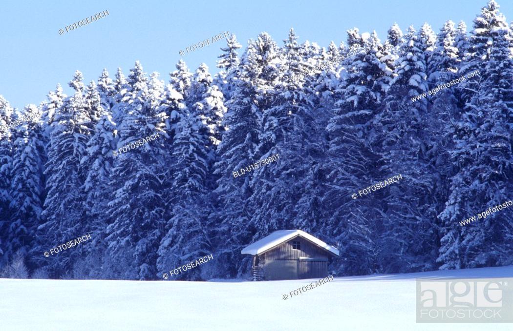 Stock Photo: blue, cabin, cold, conifer, coniferae, conifers, cottage.