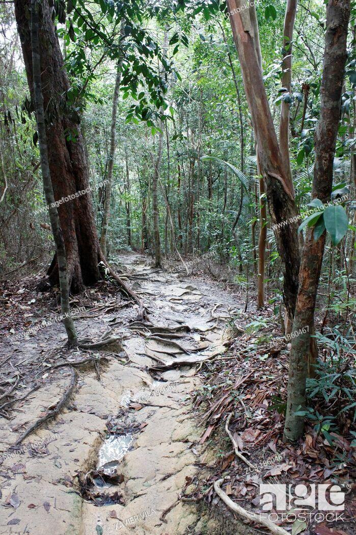 Stock Photo: Path in the tropical jungle, national park, Pulau Pinang, Penang, Malaysia.