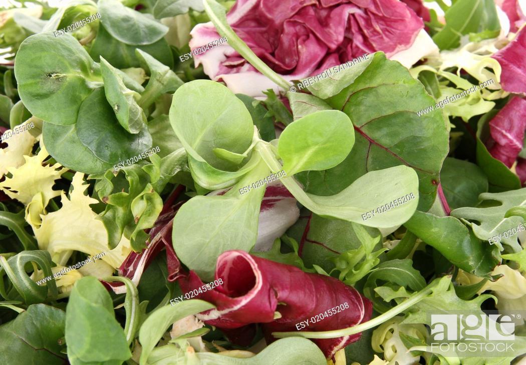 Stock Photo: close up on salad.