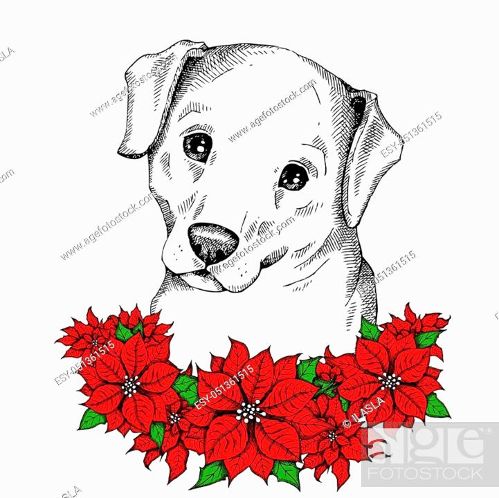 Cute Labrador Retriever Face With Christmas Flowers Red Poinsettia Stock Vector Vector And Low Budget Royalty Free Image Pic Esy 051361515 Agefotostock