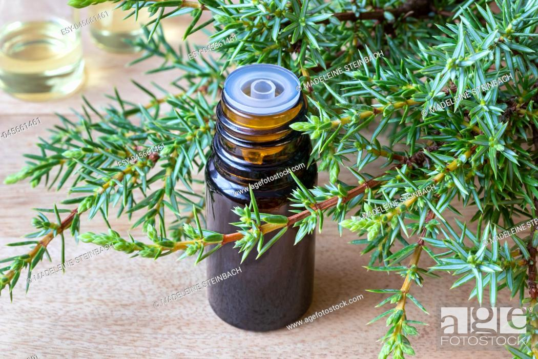 Imagen: A bottle of essential oil with fresh juniper branches.