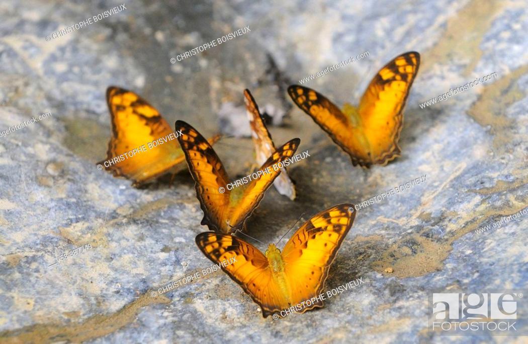 Stock Photo: Wild butterflies,Tham Khang caves, Muang Ngoi region, Luang Prabang province, Laos.