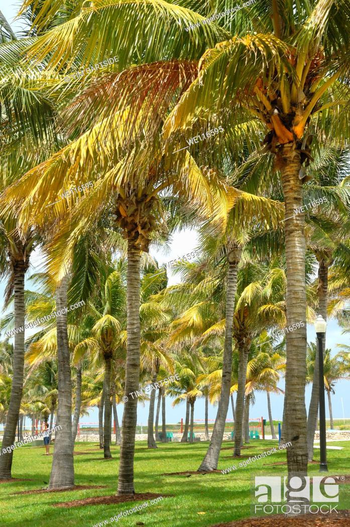 Stock Photo: Miami, Florida, USA.