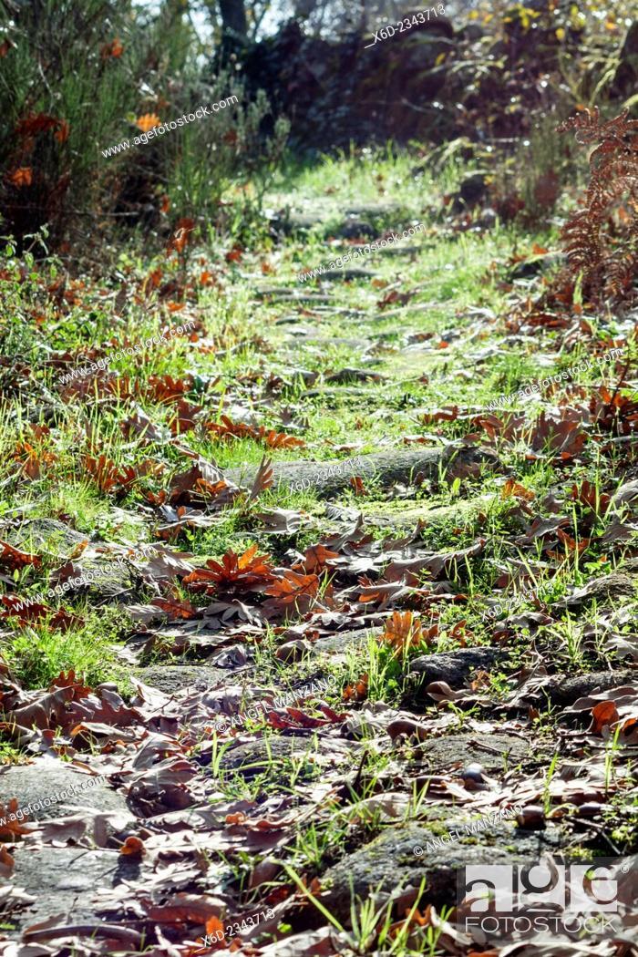 Stock Photo: Autumn landscape, mountain path; La Vera, Caceres, Extremadura.