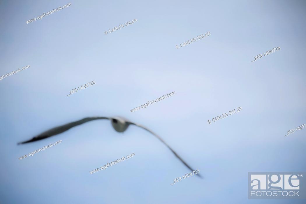 Stock Photo: Seagull on flight.