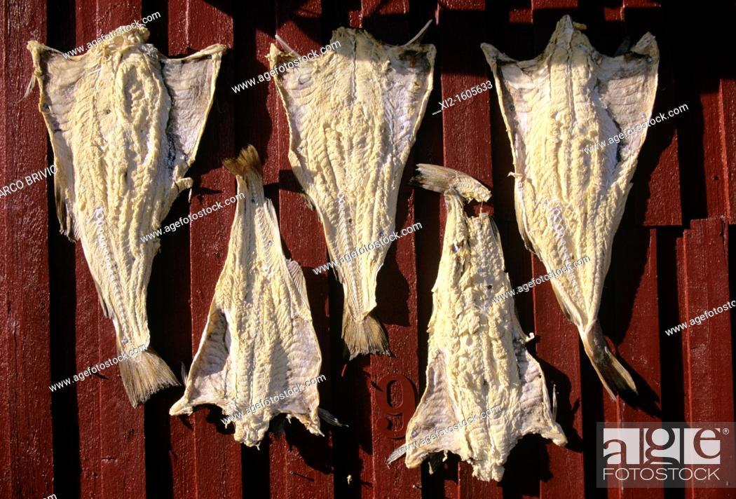 Stock Photo: Dried cod, Lofoten, Norway.