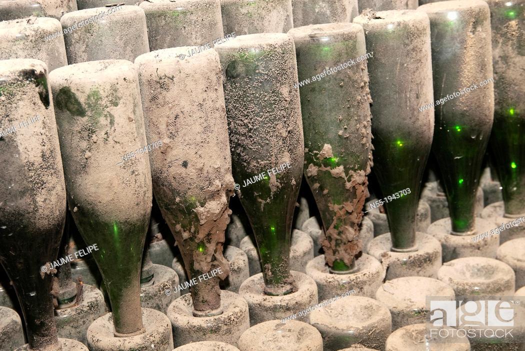 Stock Photo: Bottles of ''cava'' in an old abandoned wine cellar. Vilafranca del Penedès. Catalonia. Spain.