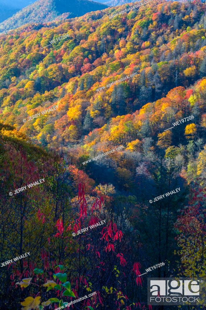 Stock Photo: Autumn Color in the Great Smoky Mountains National Park.