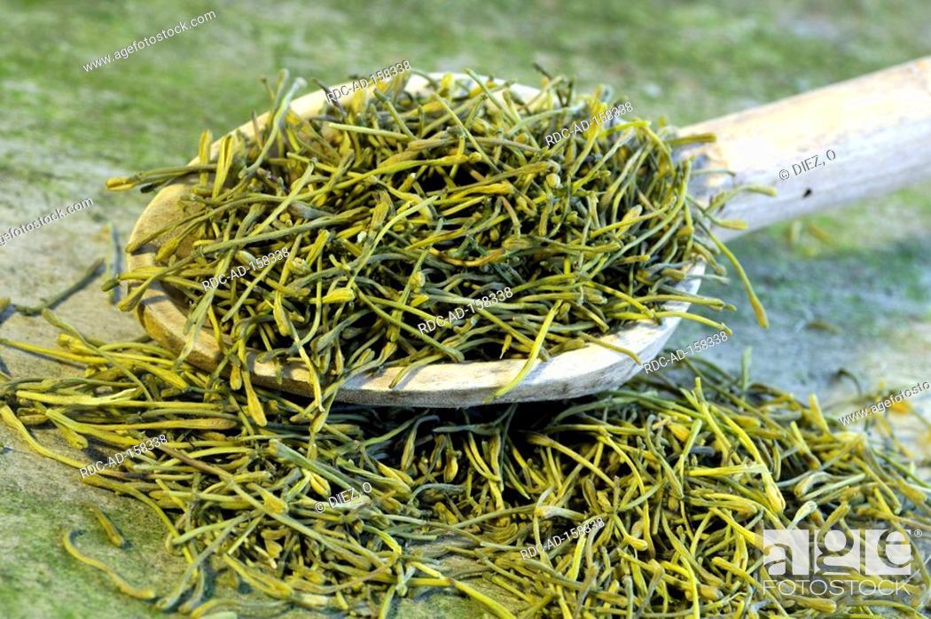 Stock Photo: Jin Yin Hua Lonicera caprifolium Lonicera japonica Goat's Leaf Jinyinhua.