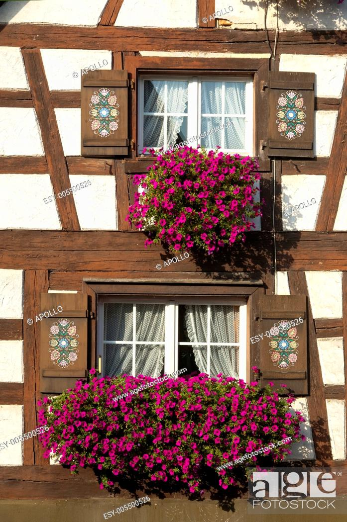 Stock Photo: Flower box brimming with petunia in a window of half-timbered house, Baden-Wuerttemberg, Germany.