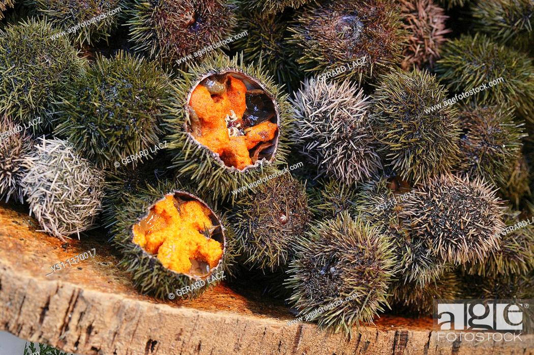 Stock Photo: SEA URCHINS AT A FISH STALL.