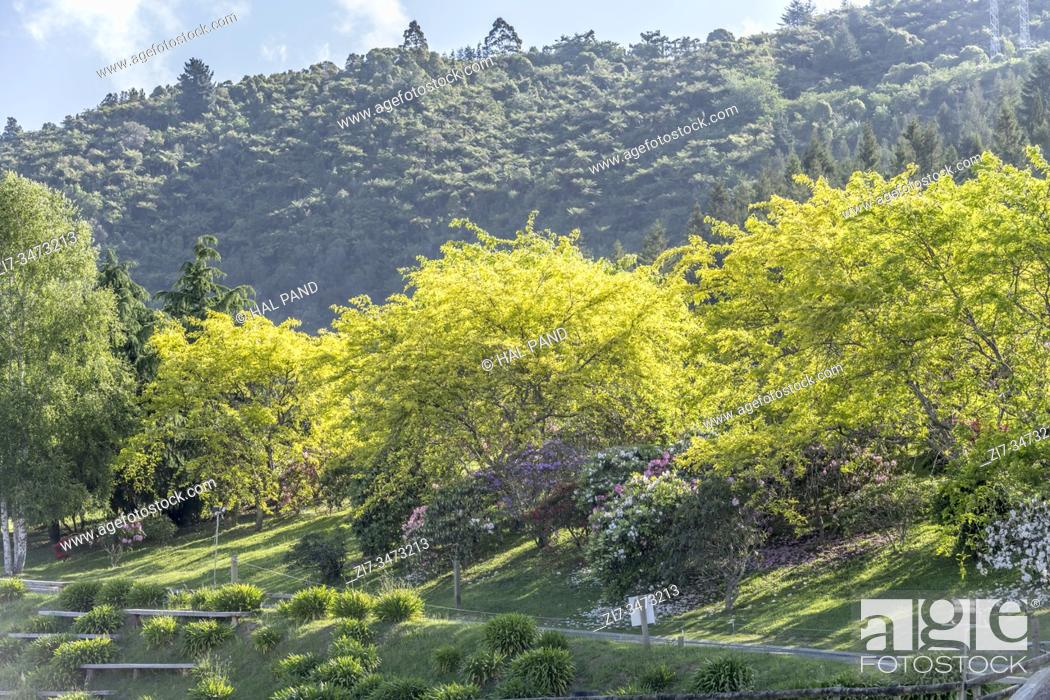 Stock Photo: blossoming Rhododendrum bushes and bright green tree leaves on slope at park at touristic town, shot in bright late spring light at Rotorua, North Island.