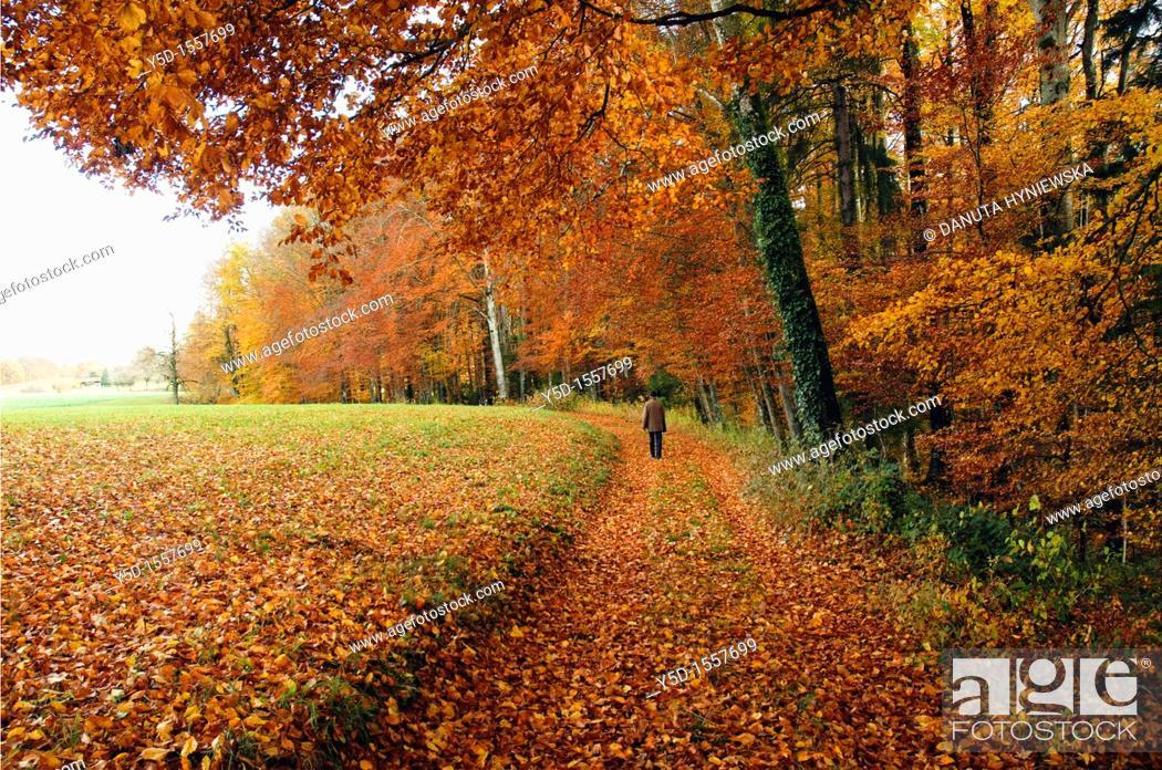 Stock Photo: autumn scene, forest, little village promasens, Fribourg canton, Switzerland, autumn.