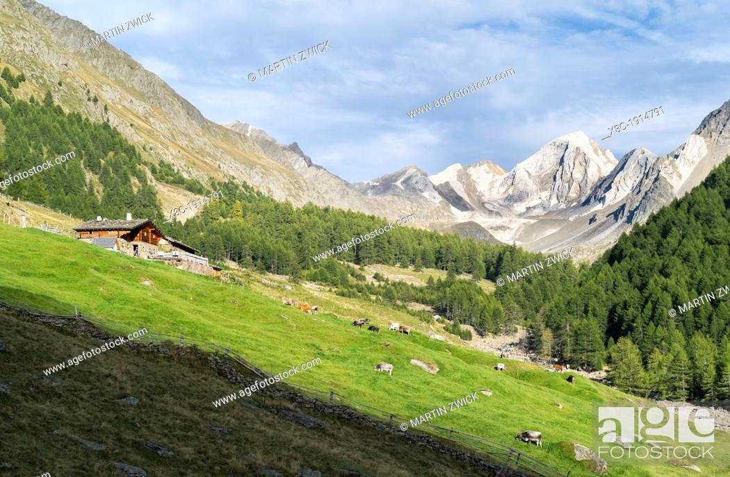 Stock Photo: Valley Pfossental Val di Fosse between Texel or Tessa mountain range and Oetztal alps in South Tyrol  Mountain farm Rableidalm  Europe, Central Europe, Austria.