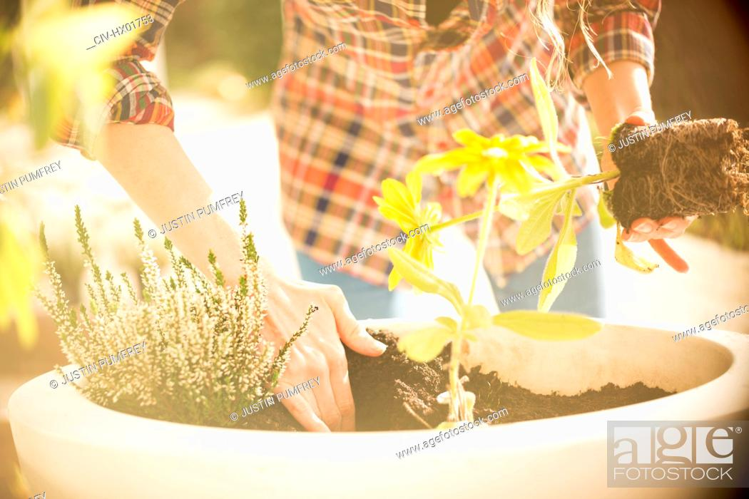 Stock Photo: Woman potting plants and herbs in sunny flowerpot.