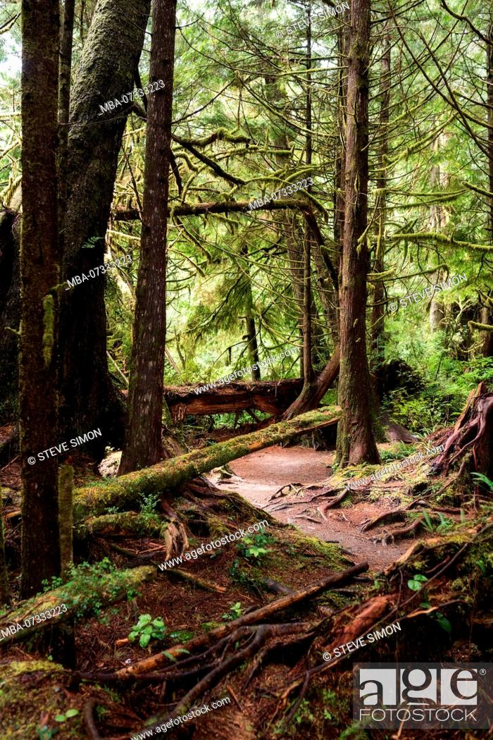 Stock Photo: View into the rainforest, Pacific Rim National Park, Canada.