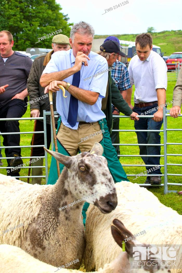 Stock Photo: Farmer showing their sheep at The Roman Wall Show, Steel Rigg Hadrian's Wall Path Northumberland England UK.