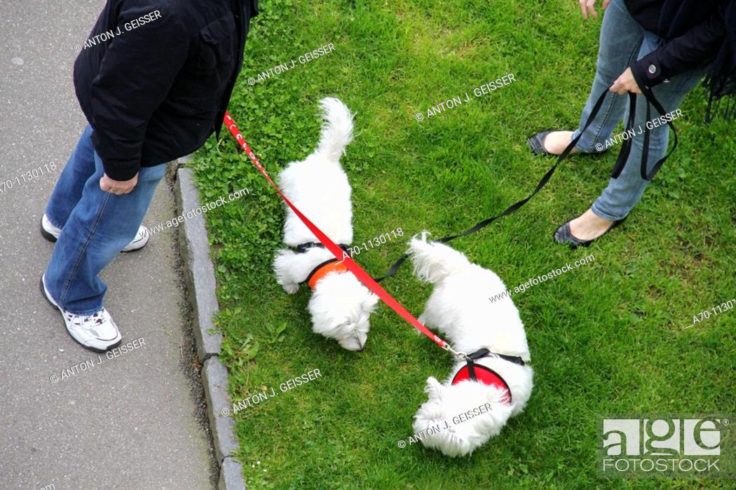 Stock Photo: Dogs at the line , feature.