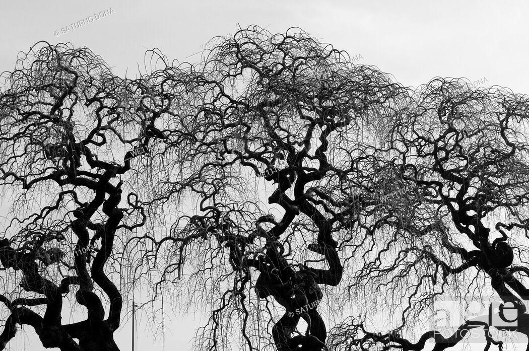 Stock Photo: Strange Trees.