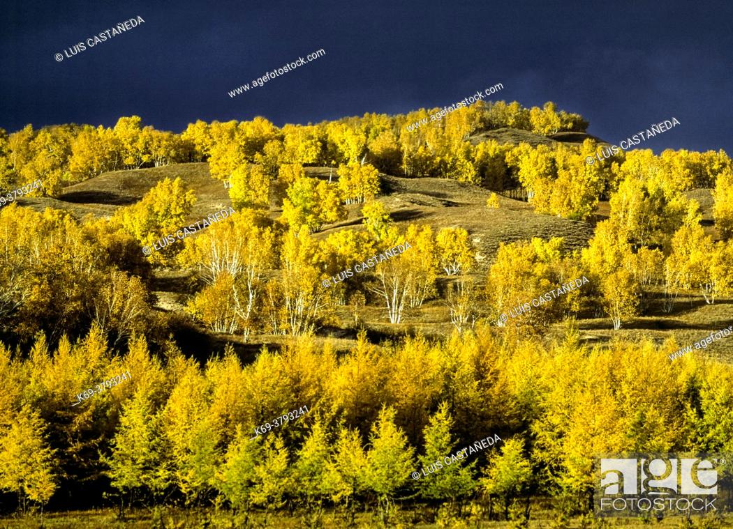 Stock Photo: Autumn in Bashang. Inner Mongolia. . Bashang Plateau or Bashang Grasslands covers about 16, 000 square kilometres (6, 200 sq mi) of northwest Hebei and.