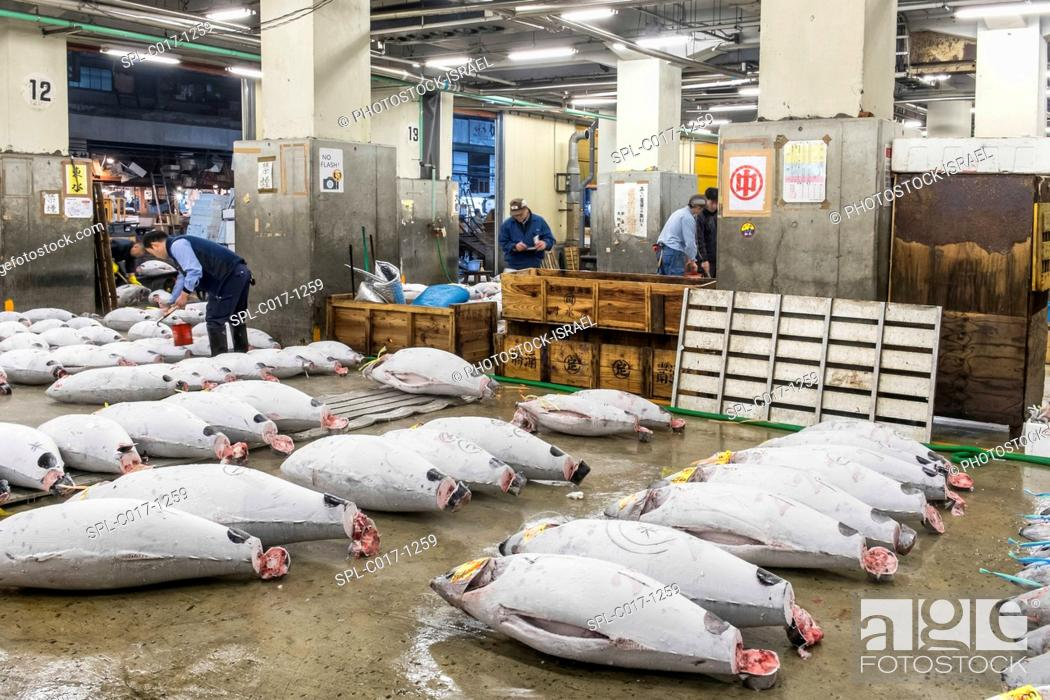 Stock Photo: Japanese buyers inspect large frozen tuna fish on floor of warehouse in the Tsukiji fish market, largest in the world, Tokyo, Japan.