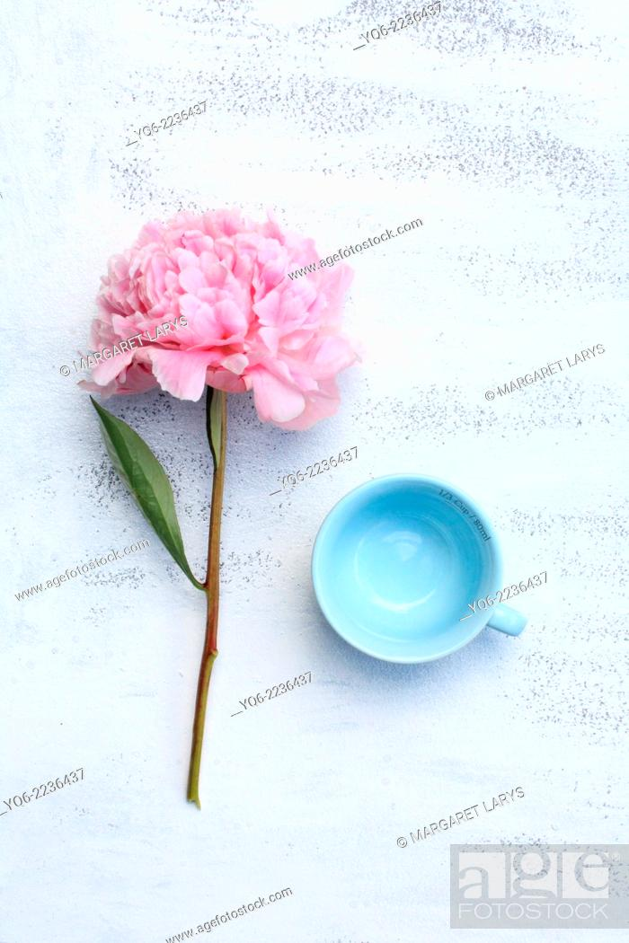 Stock Photo: Blue pastel teacups and pink peonies on white.